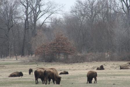 Shelby Farms Park IMG_9726