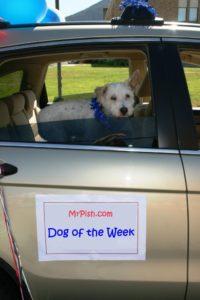 dog of the week pish parade IMG_3580 COMP
