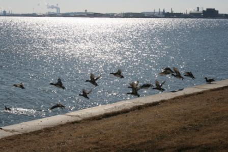 ducks at fort mchenry ftIMG_8070