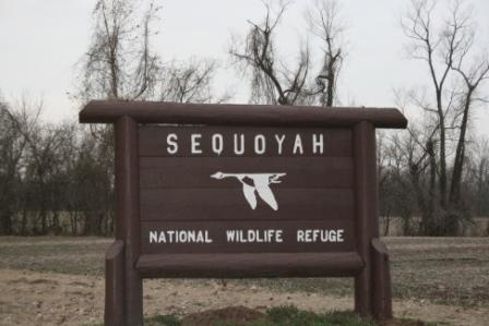 Sequoyah National Wildlife Refuge sqIMG_9495