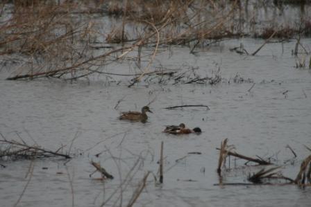 Sequoyah National Wildlife Refuge sqIMG_9771