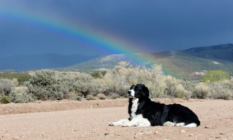 angelo-and-rainbow