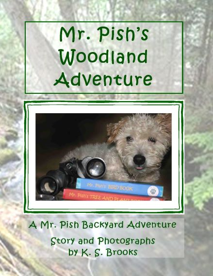 Mr. Pish's Woodland Adventure